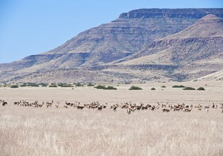 Desert  Rhino  Camp Landscape