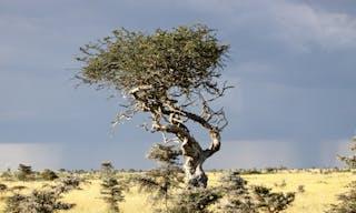 El Karama Landscape
