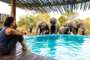 Elephanrs Come To Drink At The Lodge Pool Africa On Foot
