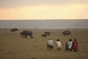 Elephant  Pepper  Camp  Bush  Walk