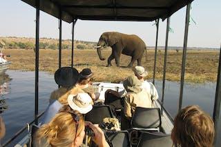 Elephants Chobe River Cruise 2