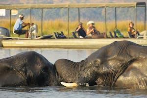 Elephants Chobe River Cruise