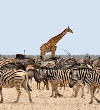 Ethosha National Park