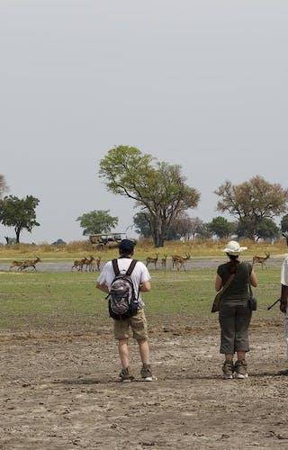 Footsteps Across The Delta Walking