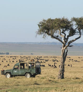 Governors Camp Migration Safari
