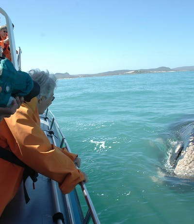 Grootbos  Garden  Lodge Whale Watching