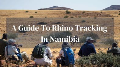 Guide To Rhino Tacking In Namibia