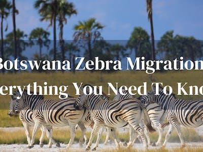 Guide To Zebra Migration Botswana