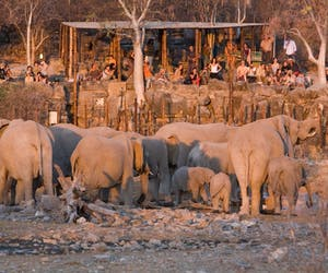 Halali Rest Camp Elephants
