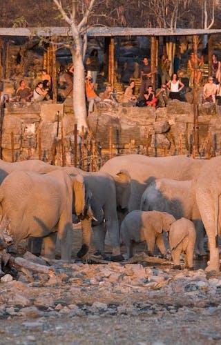 Halali Rest Camp Elephants