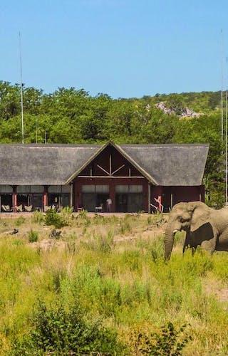 Hobatere Lodge Elepants