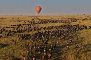 Hot Air Balloon Over The Migration By Tom Harding