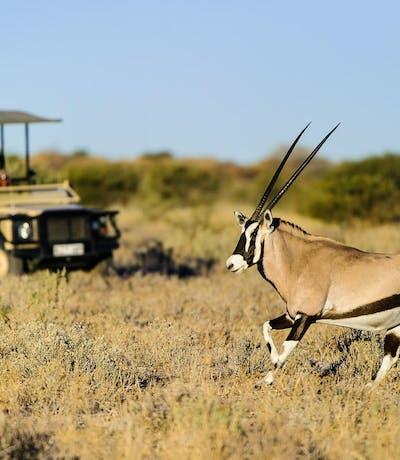 Kalahari Plains Camp Oryx