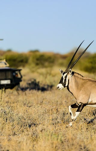 Kalahari Plains Camp Oryx