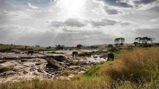 Kenya Landscape Elephant Walking In River Alex Walker Serian 1