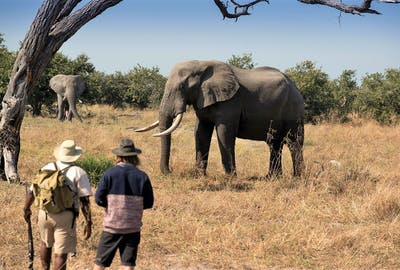 Khwai Tented Camp Moremi Reserve Botswana Walking Safari With Elephant 661