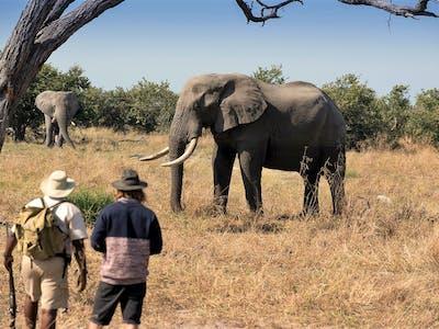Khwai Tented Camp Moremi Reserve Botswana Walking Safari With Elephant 661