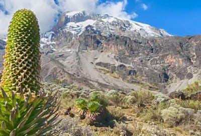 Kilimanajro Rongai