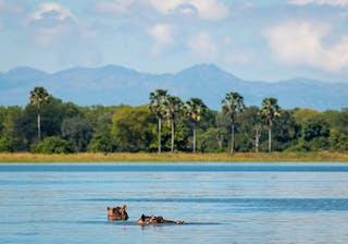 Kuthengo Liwonde River
