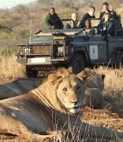 Thanda Safari Lodge Lion Game Drive