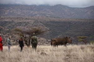 Lewa  Safari  Camp  Bush  Walk  Rhino