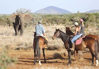 Lewa Wilderness Horseback Safari Elephant