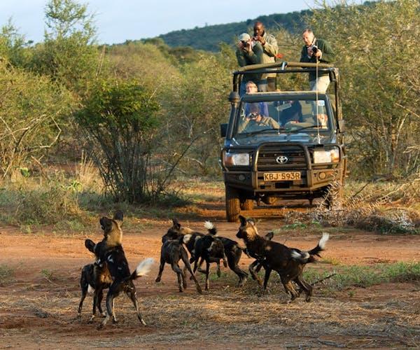 Sosian Lodge Safari Wild Dogs