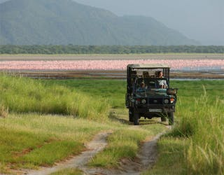 Lake Manyara Tree Lodge Flamingo Safari