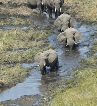 Linyanti Bush Camp Chobe Enclave Botswana Herd Of Elephant 5Sw2547 2 118