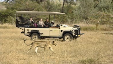 Azura Selous Game Drive Lioness