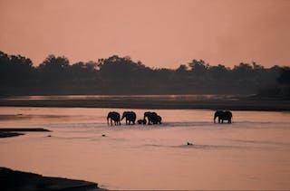 Luangwa Bush Camping Elephant River Crossing