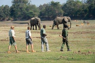 Luangwa Bush Camping Walking Safari
