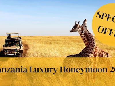 Lux Tanz Honeymoon Special 21