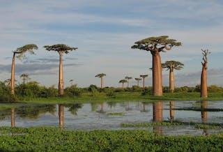 Madagascar In January
