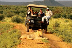 Madikwe  Hills Lion Safari