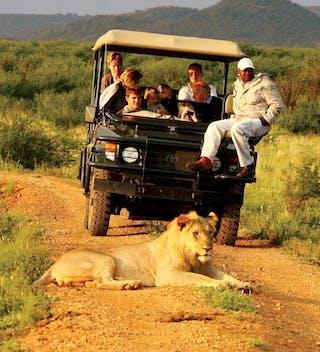 Madikwe Hills Lion Safari