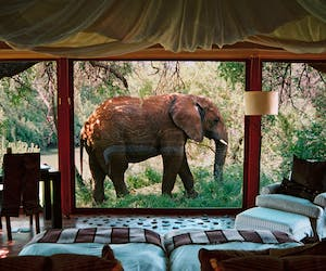 Sanctuary Makanyane Safari Lodge Elephant