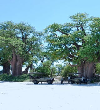 Nxai Pan Camp Baines Baobab
