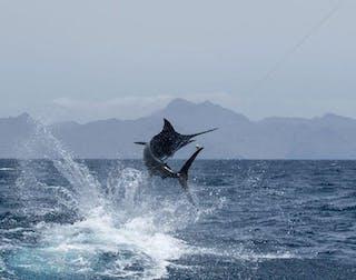 Marlin Fishing Sao Tome