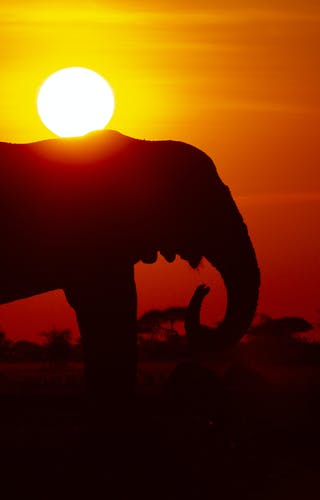 Migration Expeditions Nxai Pan Botswana Shaun Stanley 2015 11