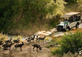 Morukuru Owners House Wild Dog Safari