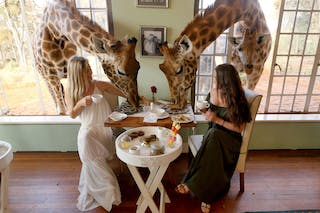 1 A  Giraffe  Manor  Dining 171026 213633