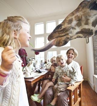 Giraffe Manor Breakfast With Giraffes