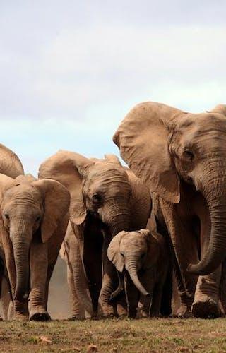 Niassa Elephants