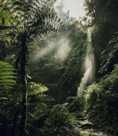 Nyungwe Forest Visit Rwanda