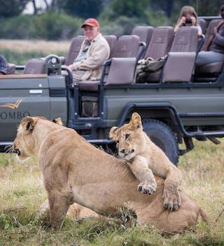 Mombo  Camp Lion Safari