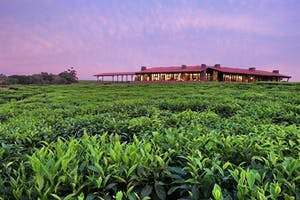 One And Only Nyungwe House Tea Plantation