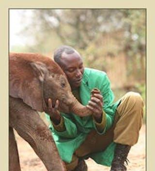 Elephant and keeper - Sheldrick Trust
