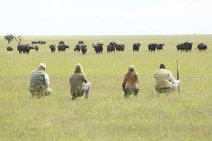 Opbc Walking Safari Wildebeest
