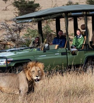 Open Vehicle Safari with Lion